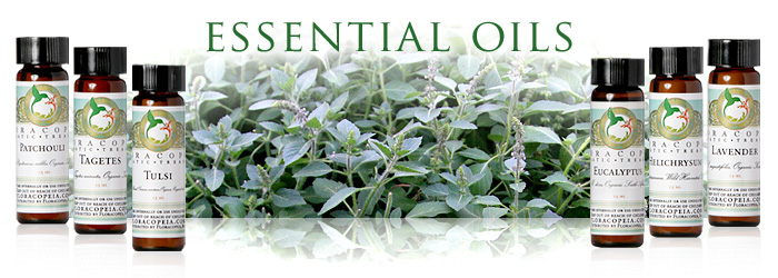 essential-oils-cat-banner