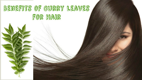Ancient Ayurveda Secret to get Long and Healthy Hair in 1 Month with Curry Leaves:DIY